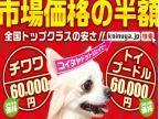 子犬家(コイヌヤ)のロゴ画像